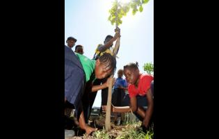 In this 2013 photo, students of Holy Family Primary School,  Briana Cutter (left) and Akiema Ricketts, plant a tree at Breezy Castle as part of National Tree Planting Day activities.